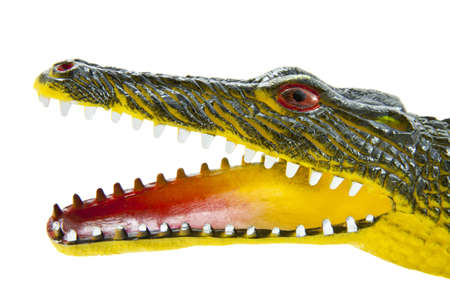 jawbone: Crocodile head close up isolated over white Stock Photo