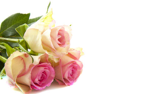 Three beautiful pink roses isolated over white photo