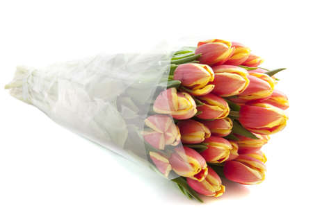 Fresh pink yellow tulips from holland isolated over white photo