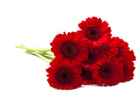 Gerbera rouge est isolé sur un fond blanc Banque d'images