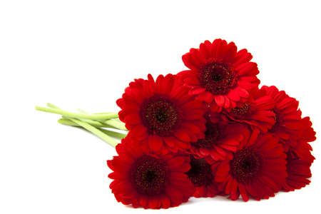 Red gerberas isolated on a white background photo
