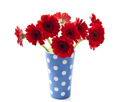 Bouquet gerbera's in blue white spotted vase over white Stock Photo - 11292450