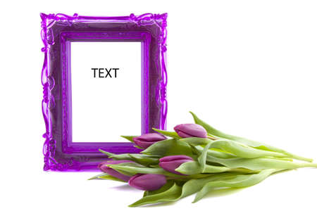Purple frame with purple tulips over white photo