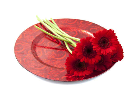Five red gerbera's on a red plate over white Stock Photo - 11292462