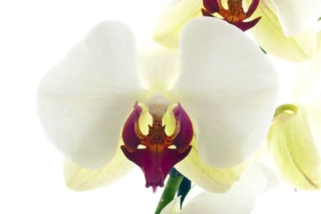 Beautiful orchid close up for background use Stock Photo - 11534797