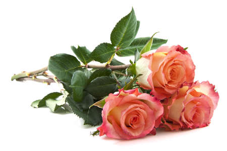 mariage: Three fresh colorful roses isolated over white