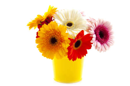 Yellow bucket with colored gerbera's isolated over white photo