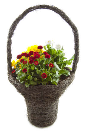 Mix of flowers in wooden basket isolated over white photo