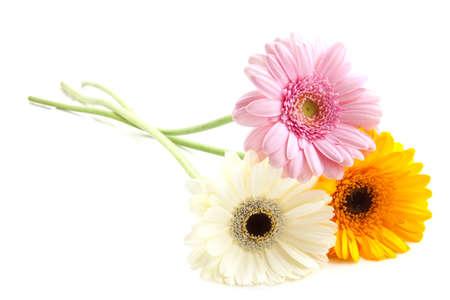 Drie kleurrijke gerbera's geïsoleerd op een witte achtergrond