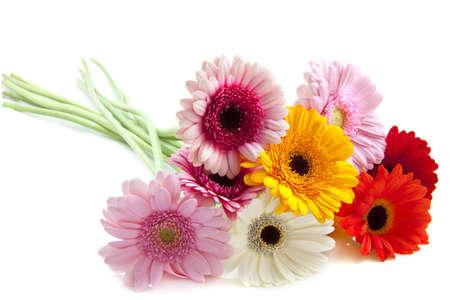 Bouquet coloré gerberas fraîchement coupés, isolé sur blanc