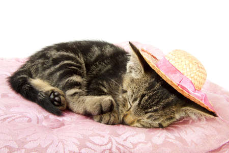 Little kitten with straw hat sleeping on a pink pillow photo