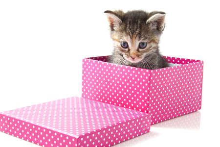 Little kitten in pink gift-box over white for background use photo