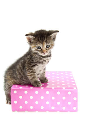 wrapped gift: Little kitten sitting on gift-box isolated over white