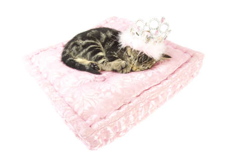 crown tail: Sleeping little kitten on a pink satin pillow isolated over white
