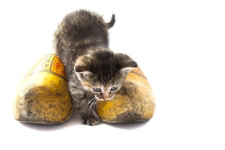 gato jugando: El pequeño gato holandés con zapatos de madera aislado más de blanco