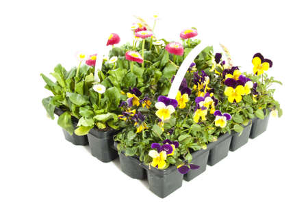 plastic box: Flowers in plastic box isolated over white Stock Photo