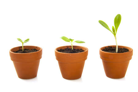 seed pots: Three jars with growing plants isolated over white Stock Photo