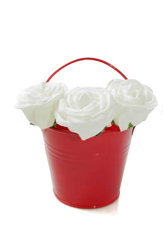 Three white roses in a red bucket isolated photo