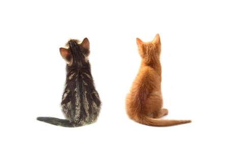 Twee kitten van achter geà ¯ soleerd op wit
