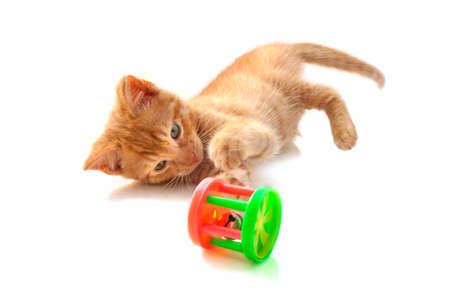 gato jugando: Gatito rojo jugando con el juguete colorido aislado más de blanco Foto de archivo