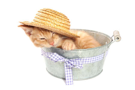 Red kitten in vintage bucket with hat on isolated over white photo