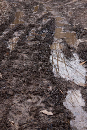 droop: Wet and muddy forest track after a heavy rainfall