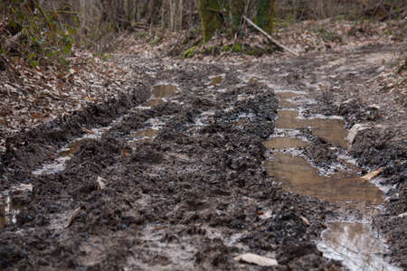 insurmountable: Wet and muddy forest track after a heavy rainfall