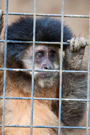 lock block: Monkey locked up in a iron cage Stock Photo