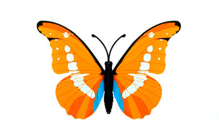 Beautiful orange colored butterfly isolated over white
