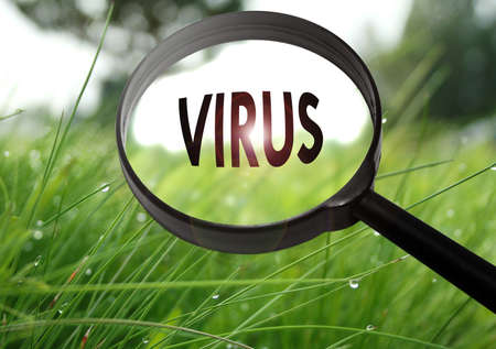 find fault: Magnifying glass with the word virus on grass background. Selective focus Stock Photo