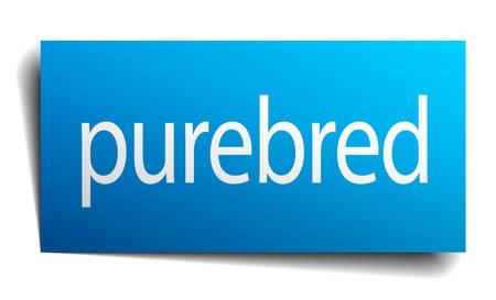purebred: purebred blue paper sign on white background Illustration