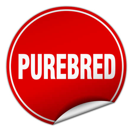 purebred: purebred round red sticker isolated on white Illustration