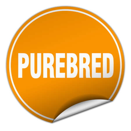 pedigreed: purebred round orange sticker isolated on white