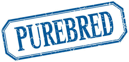 purebred: purebred square blue grunge vintage isolated label