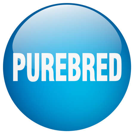purebred: purebred blue round gel isolated push button