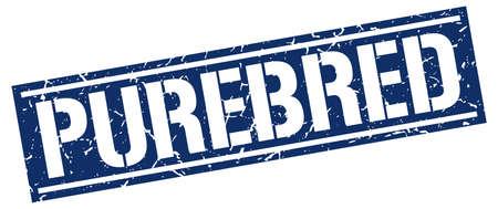 purebred: purebred square grunge stamp Illustration