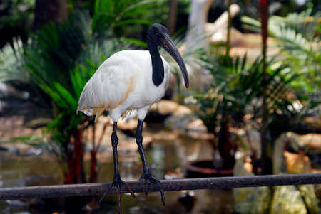 Egret in the Nong Nooch Garden photo