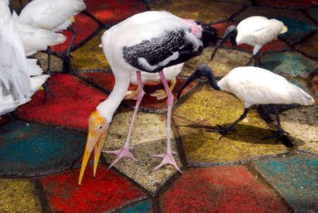 Egrets in the Garden Stock Photo - 22246747