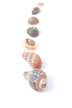 seashells of various sizes on a white background are laid out in a number of