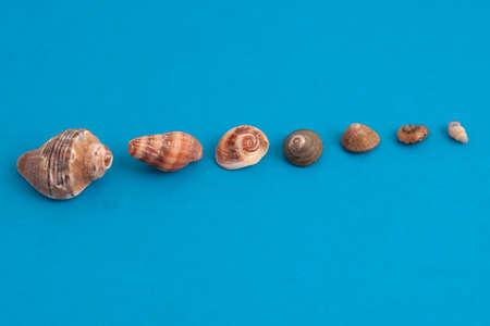 Muscheln auf blauem aufgereiht in einer Reihe