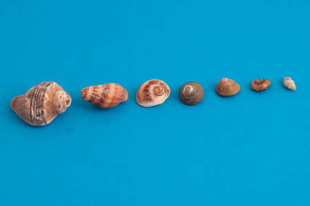 seashells on blue lined in a row photo