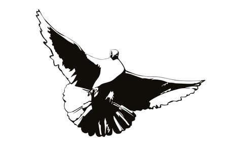 paloma caricatura: silueta de una paloma sobre un fondo blanco en negro Vectores