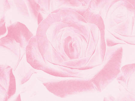Abstract background with pink roses, a major plan photo