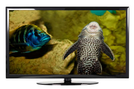 TV showing the fish on a white background Stok Fotoğraf