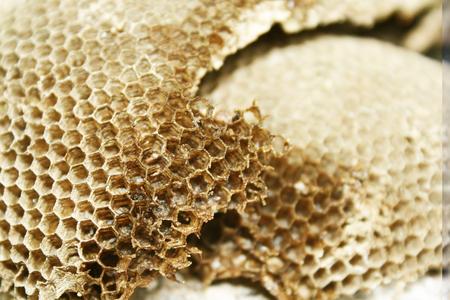 textura: Casa di Bee Archivio Fotografico