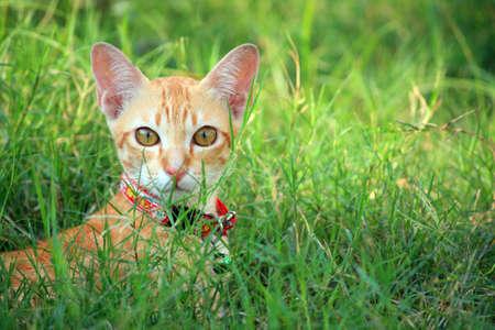 a cat on green grass