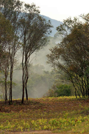 Misty in the Thailand forest
