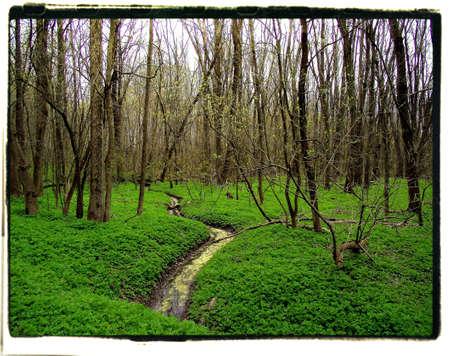 ポート ホープ オンタリオの森林風景