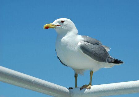 Sea gull sitting on steel tubes Banco de Imagens