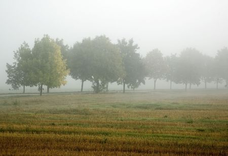 Line of trees fading in the mist in foggy morning at countryside Stock Photo - 3232190